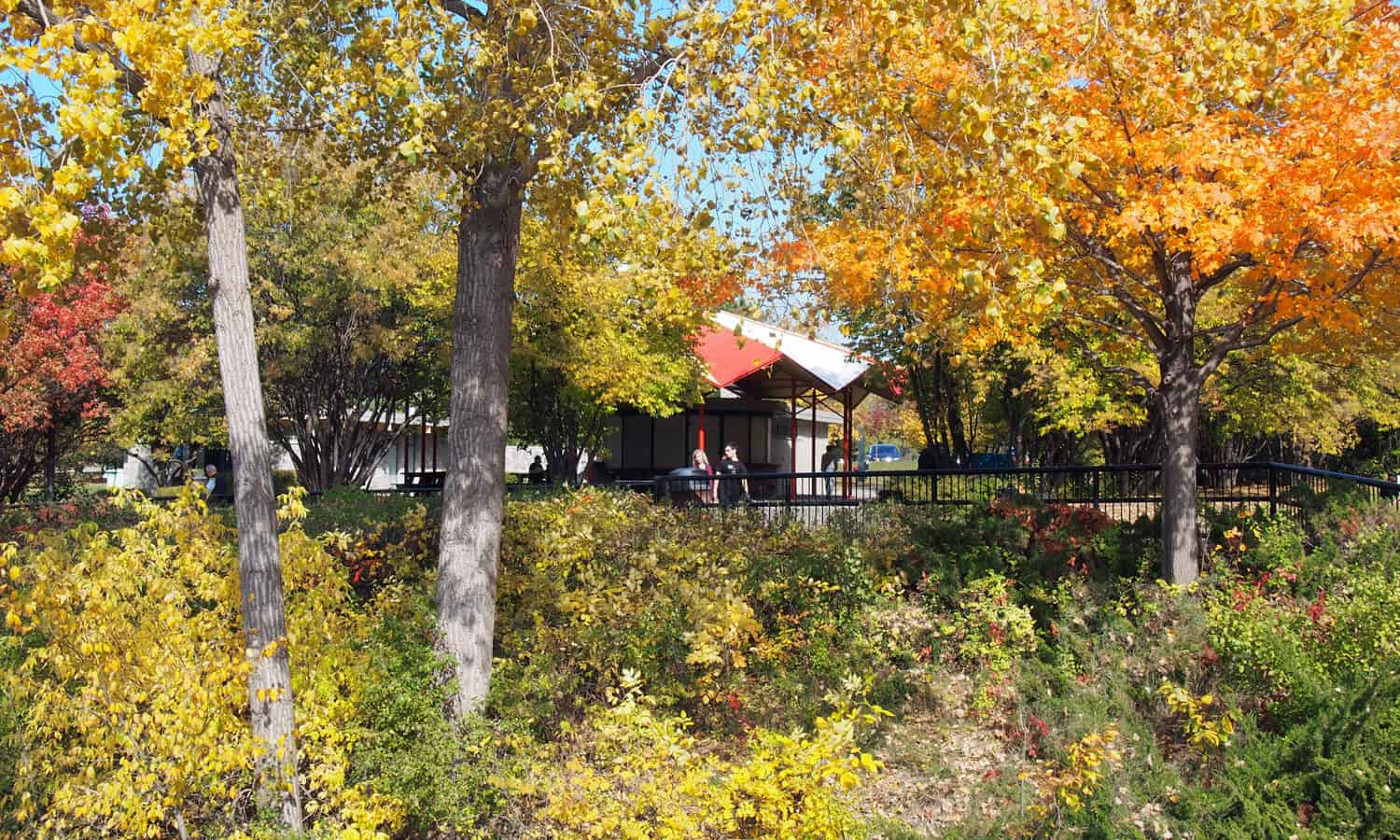 Looking towards the pavilion with fall foliage in the foreground